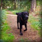 Schnerzfrei nach der Tierphysiotherapie Rheinberg