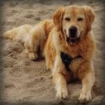 Glücklich nach der Tierphysio